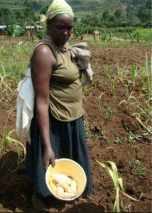 MLN farmer Kenya harvest