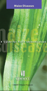 cimmyt-maize-diseases-guide